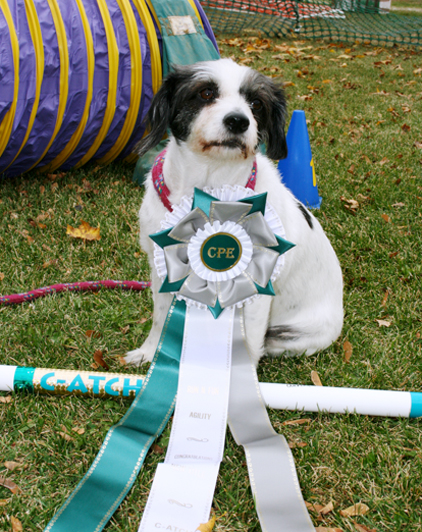 Madra  earned  C-ATCH agility title
