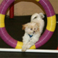 Recent Photos of Agility and Training